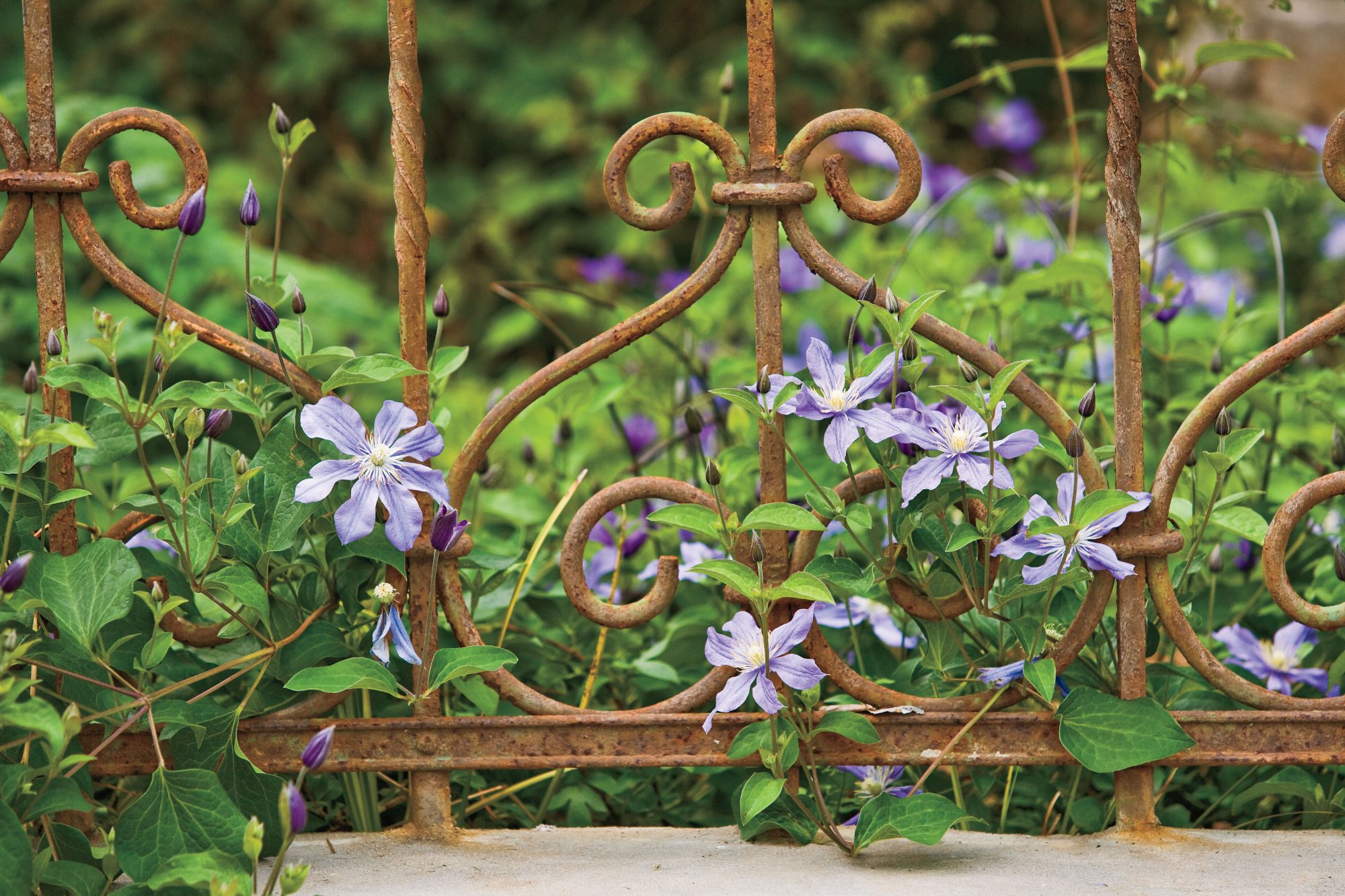 Flower Plants: Blooms for All Seasons