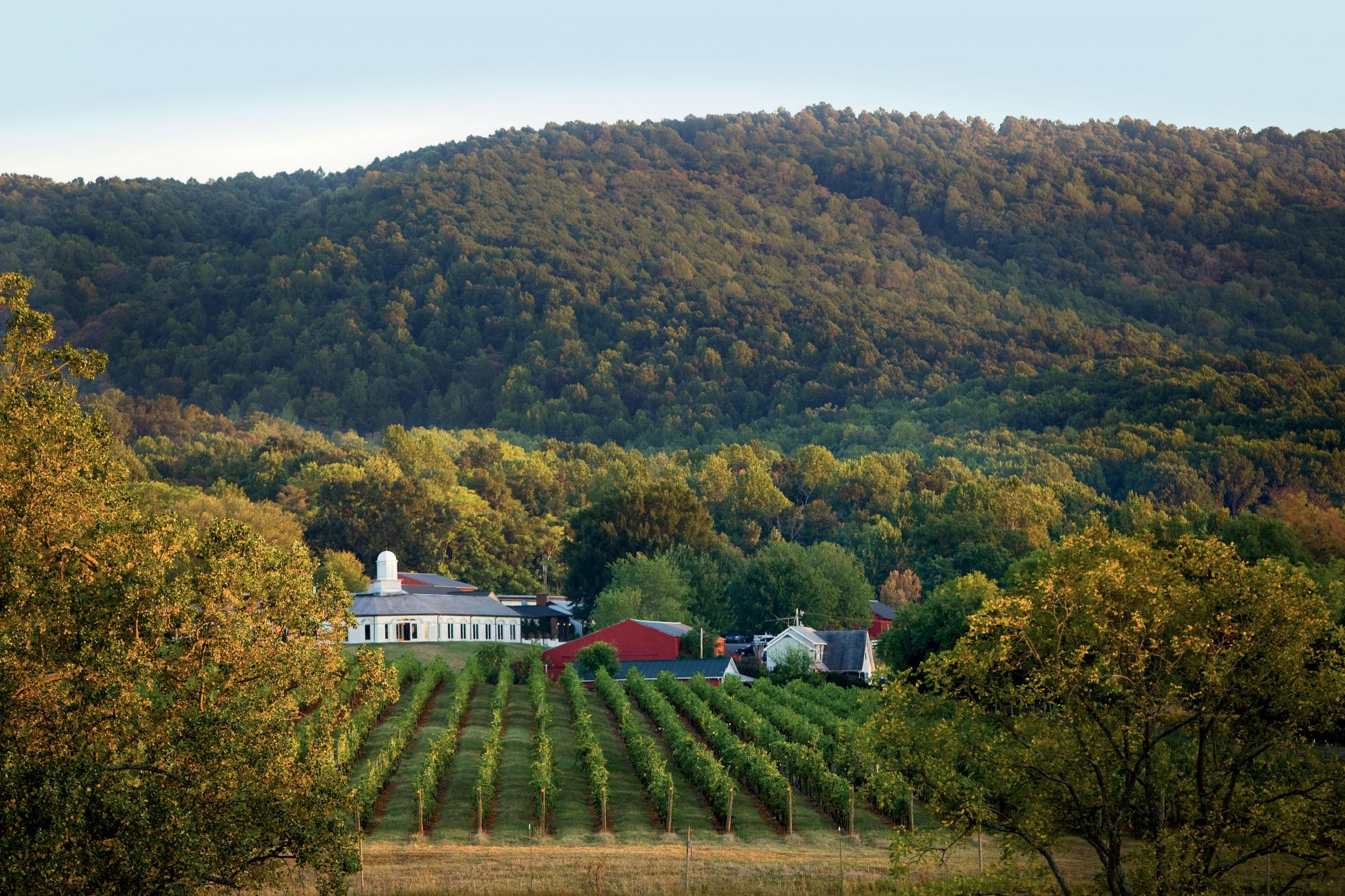 Monticello Wineries