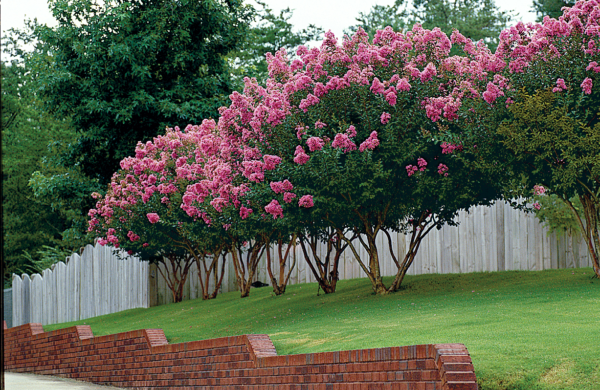 Beautiful Trees For Your Garden Southern Living
