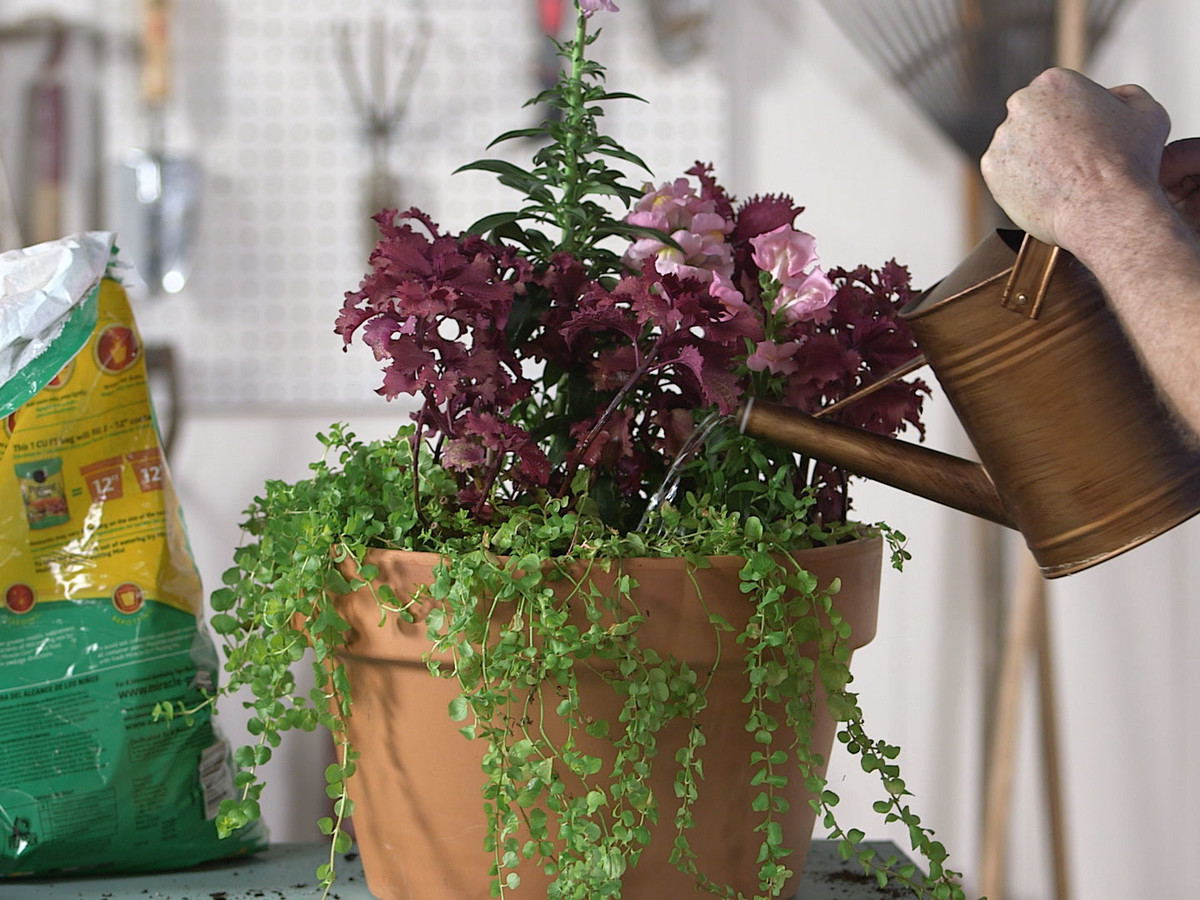 Grumpy Flower Containers Image