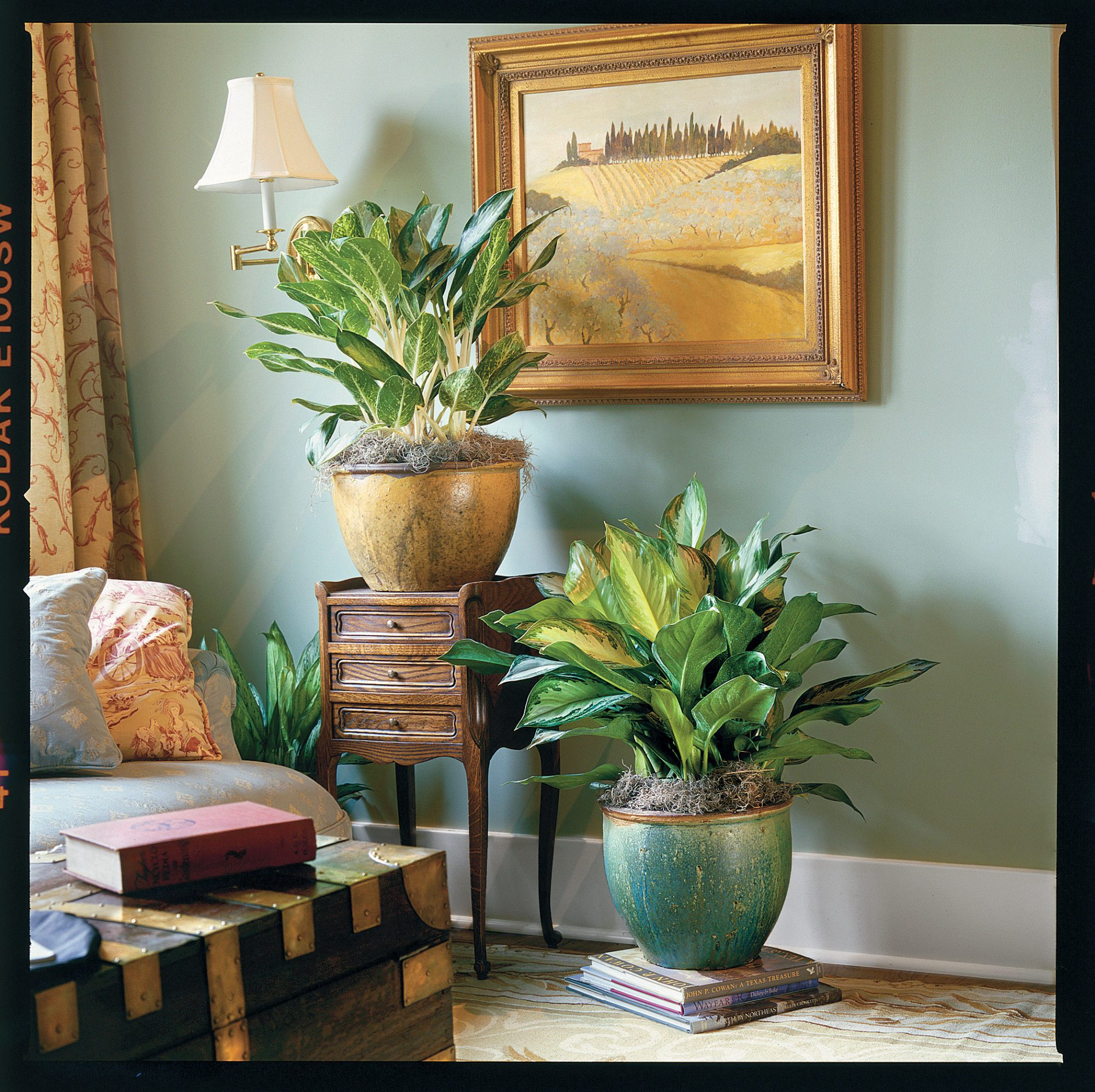 (new image) The Easiest Houseplant