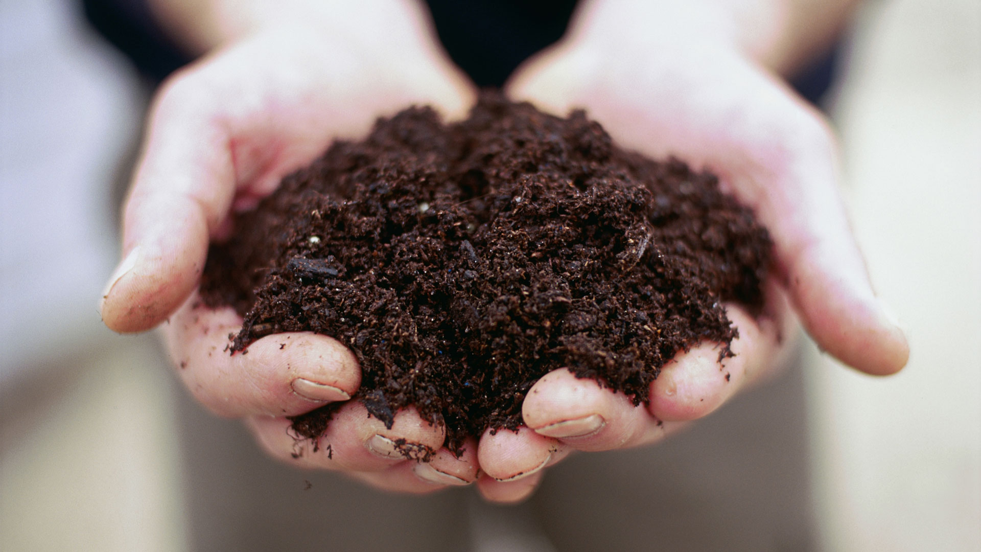 9 Foods That Improve Soil Image