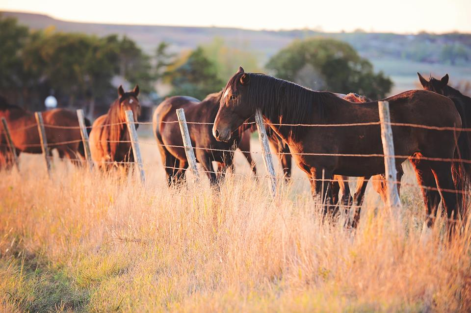 Ree Drummond Ranch Horses
