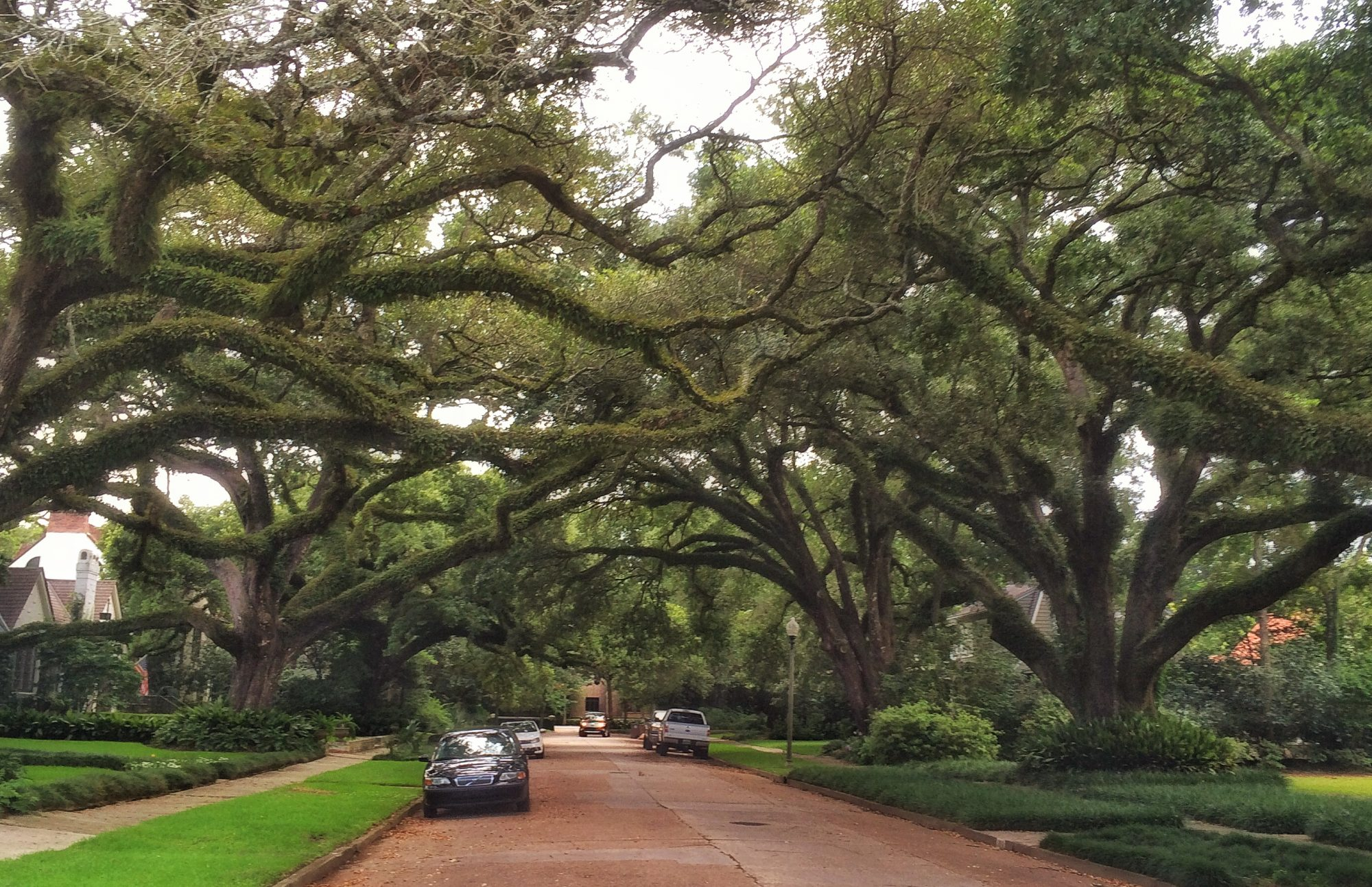 Live Oak Lined Ashland Place in Mobile