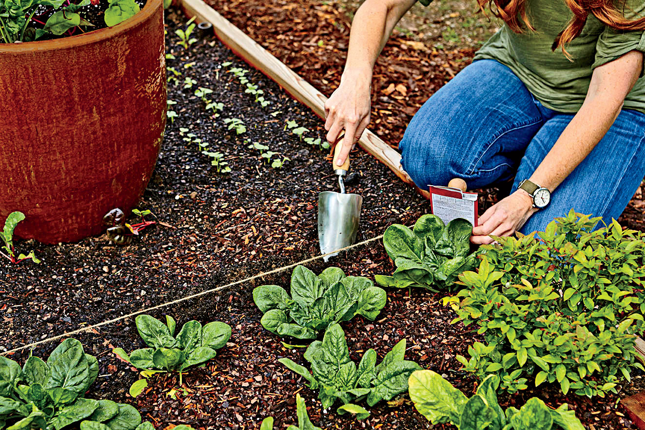 Planting Greens in Raised Beds