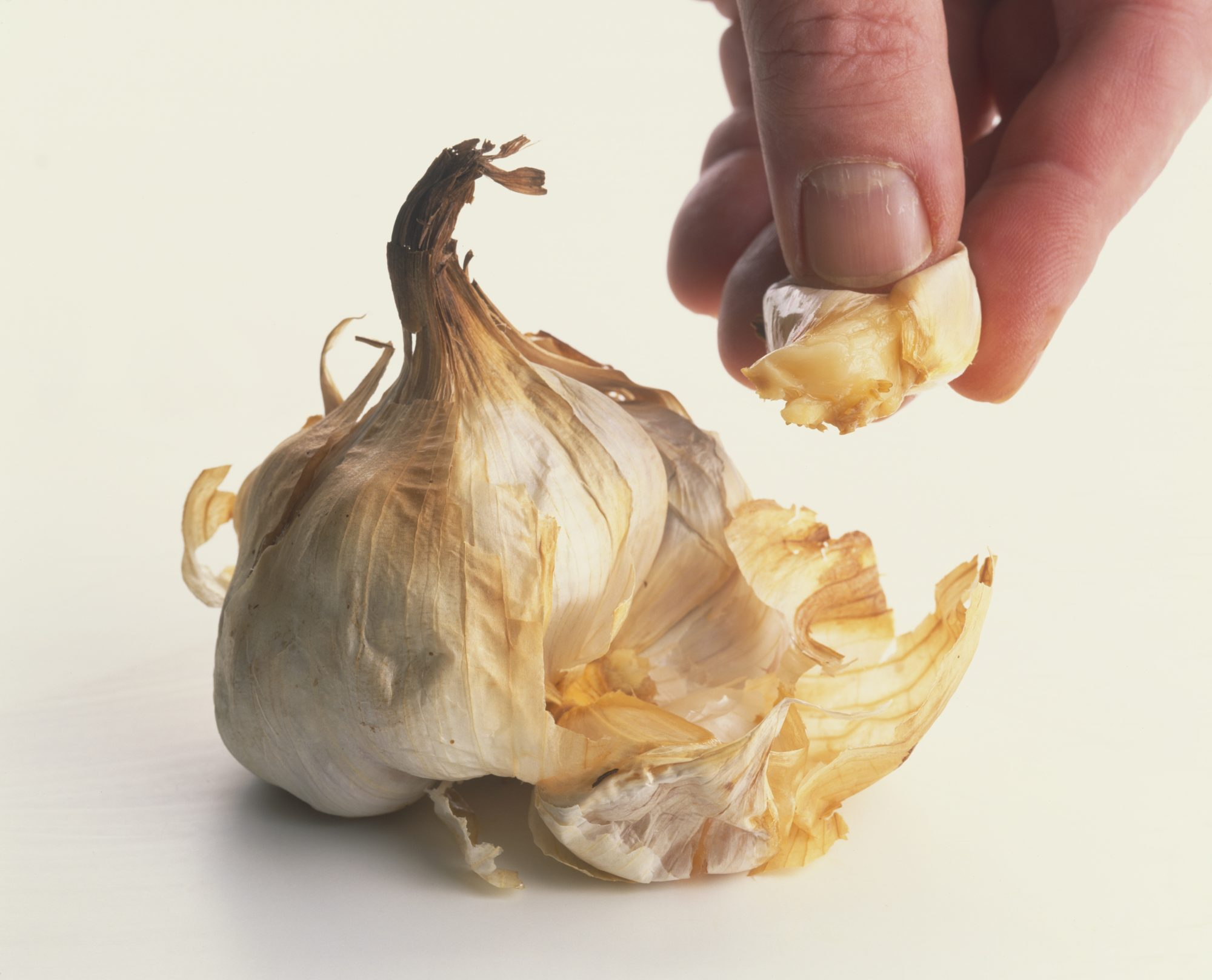 head of roasted garlic