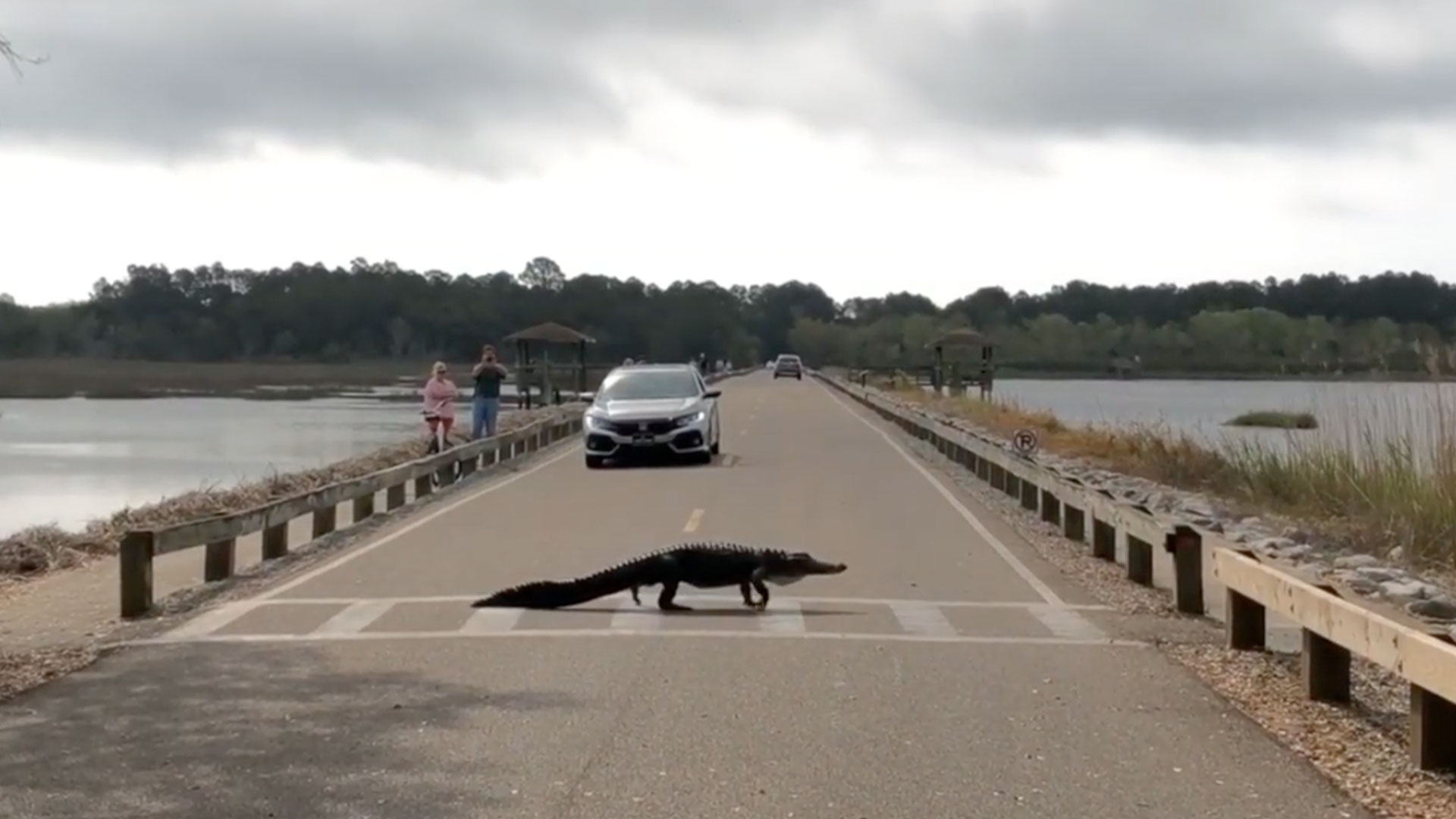 Alligator Crosswalk