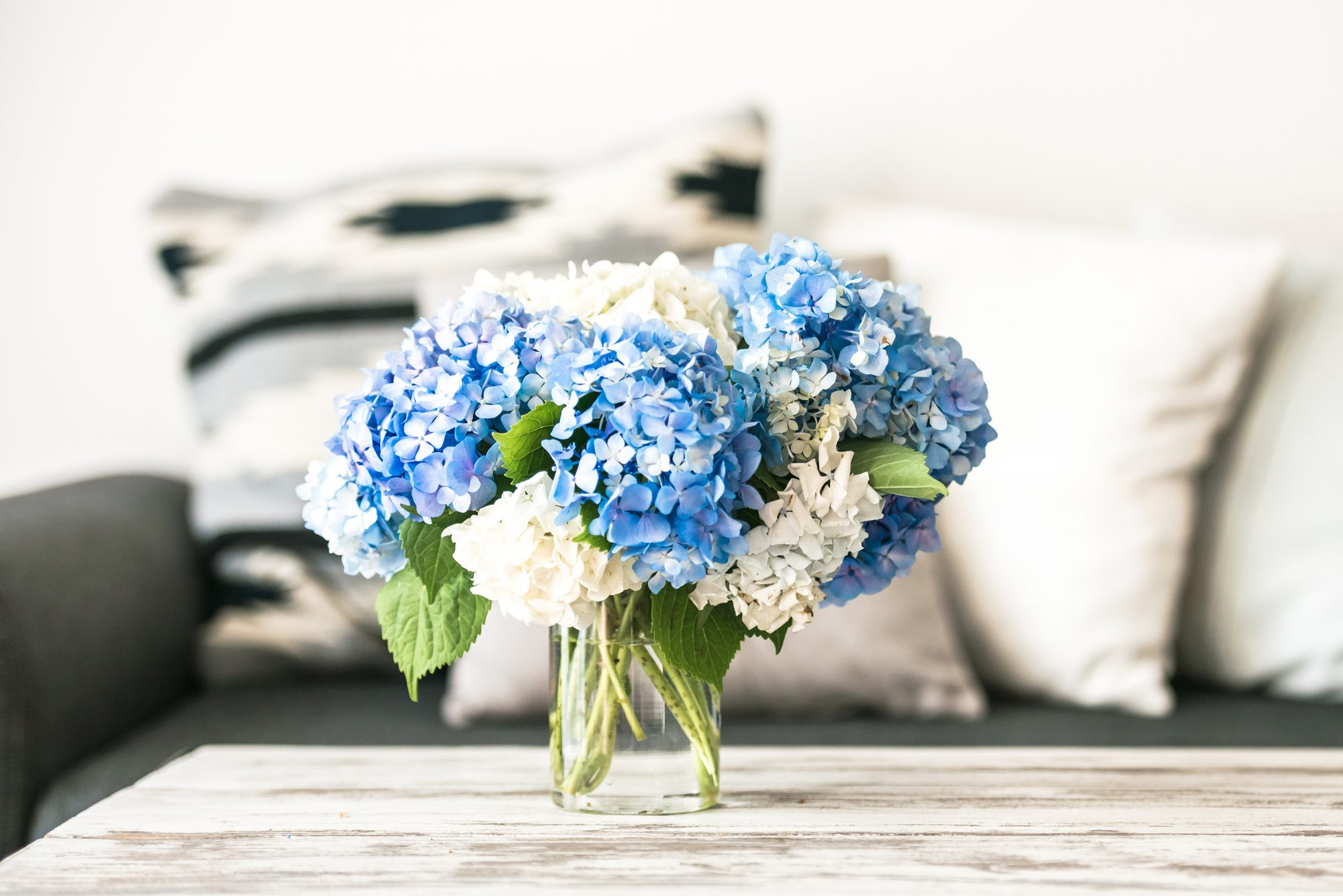 Blue and White Hydrangeas in Vase