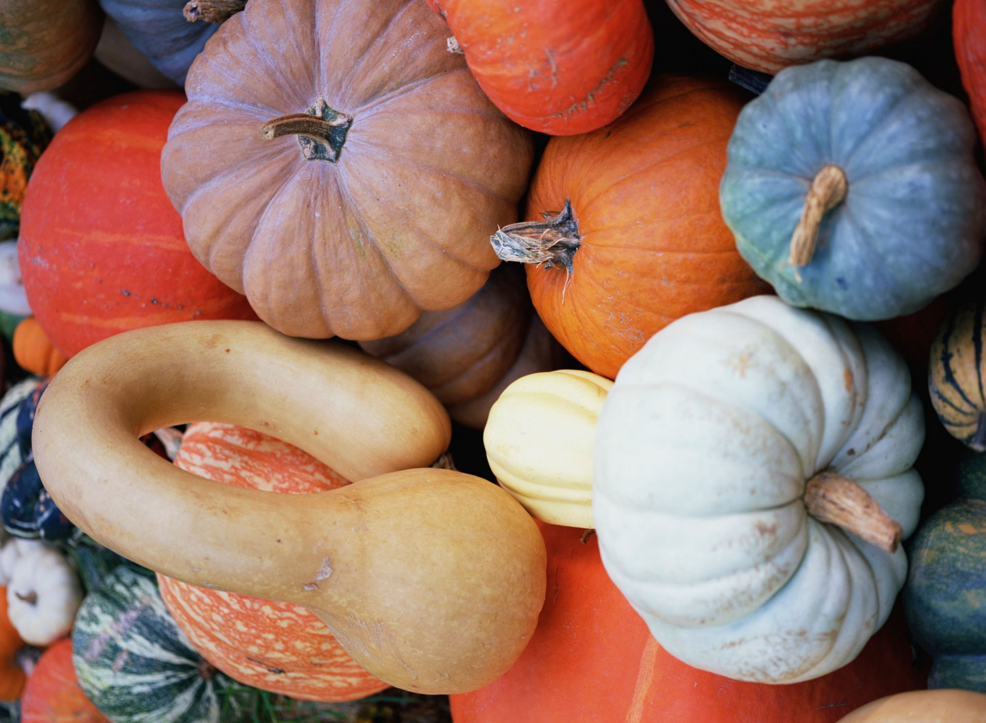 Pile of Pumpkins and Gourds