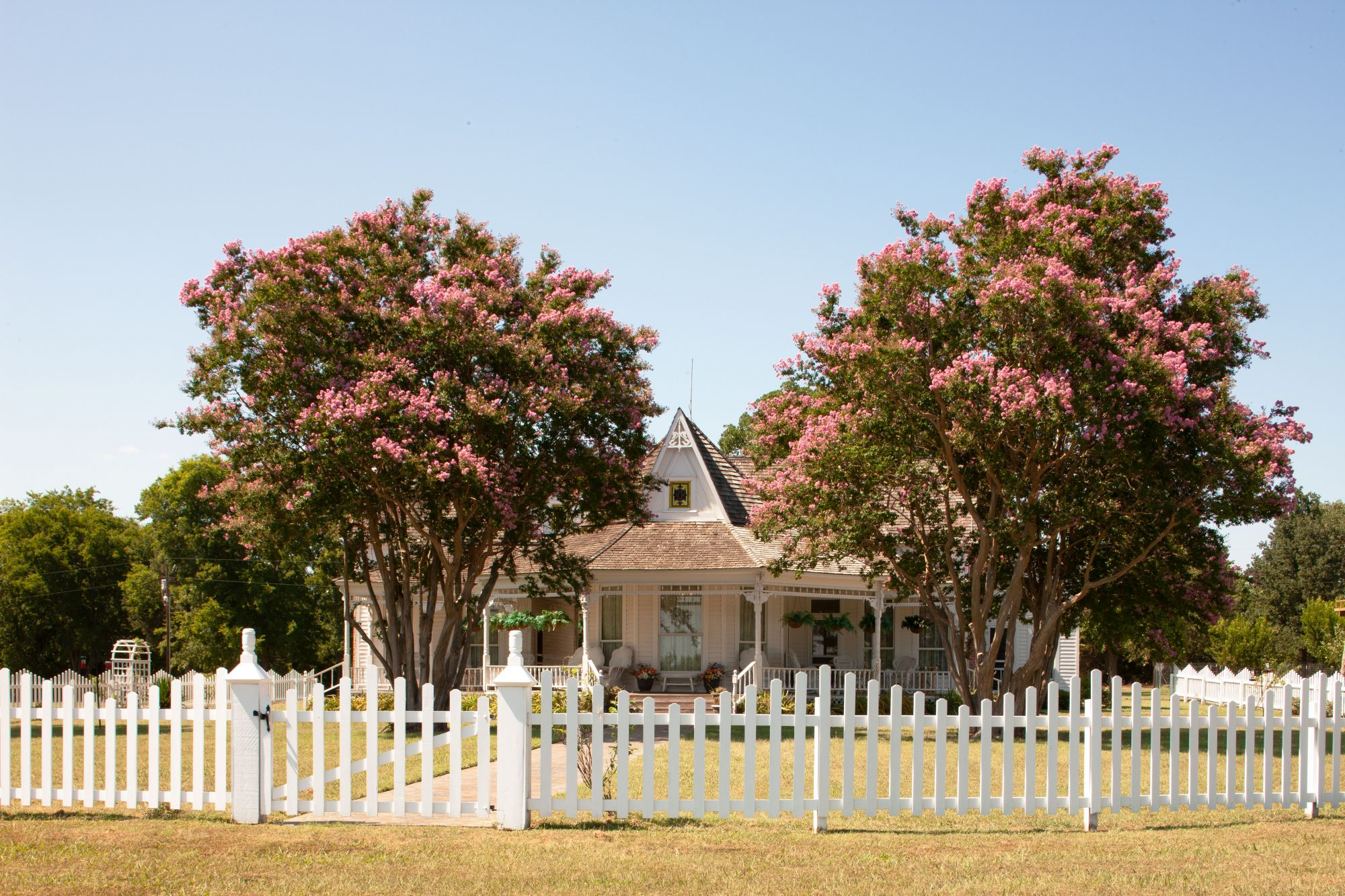 Crepe Myrtle Trees in Front of House