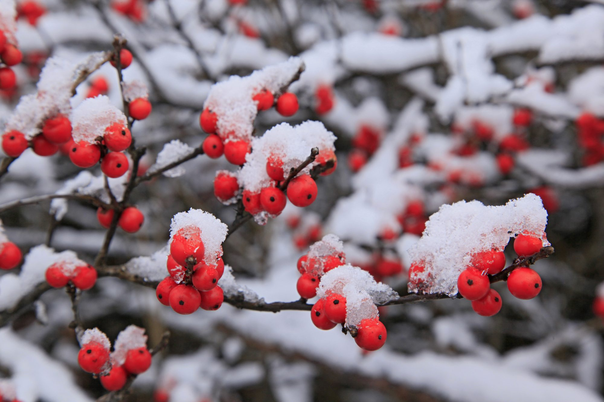 Our Favorite Winter Plant for Southern Gardens