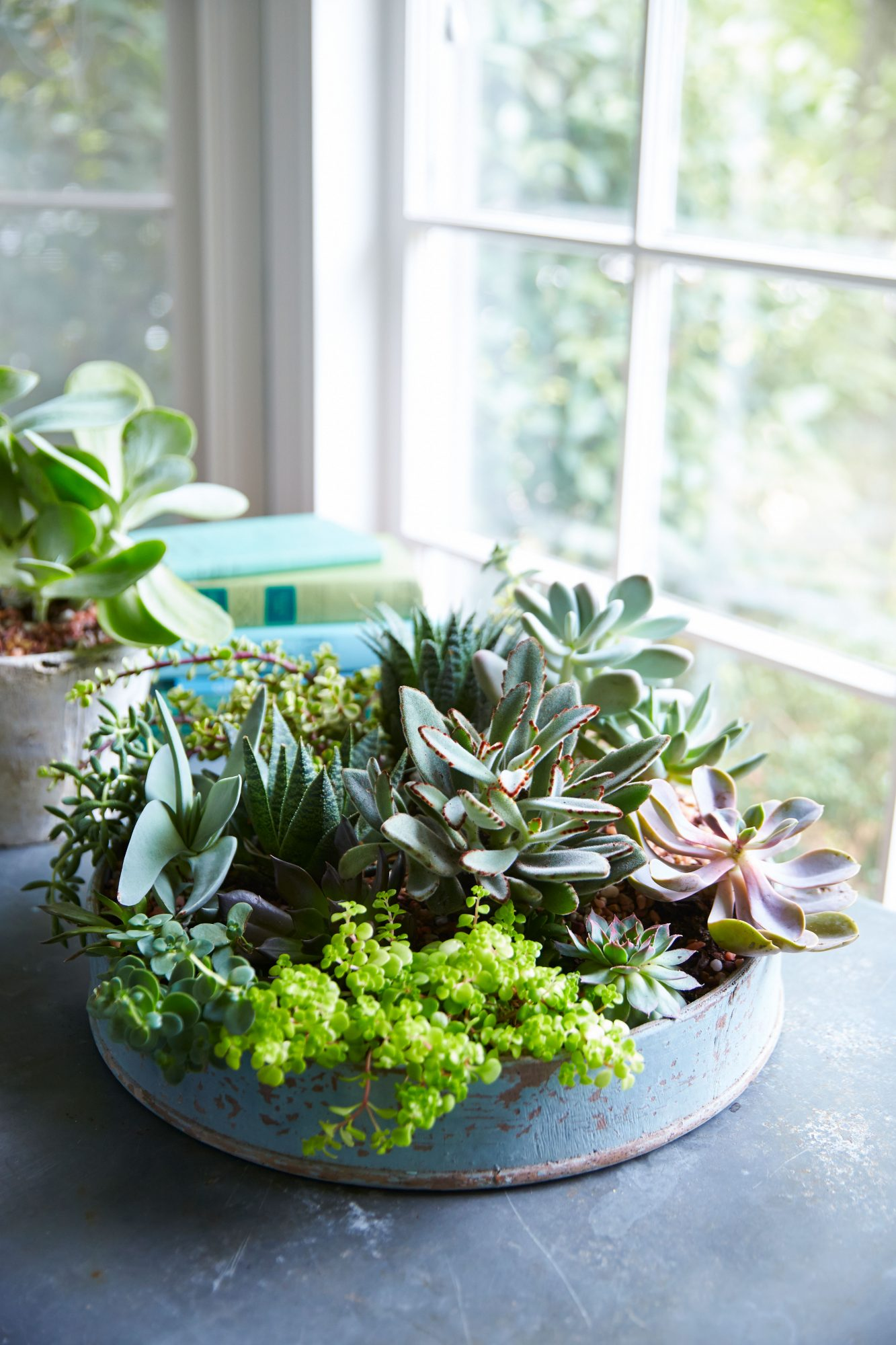 Succulents in Shallow Planter by Window