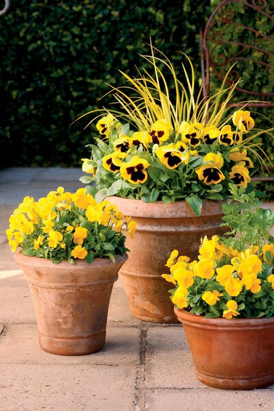 58eebf38bc9 10 Flowers That Thrive in Full Sun - Southern Living
