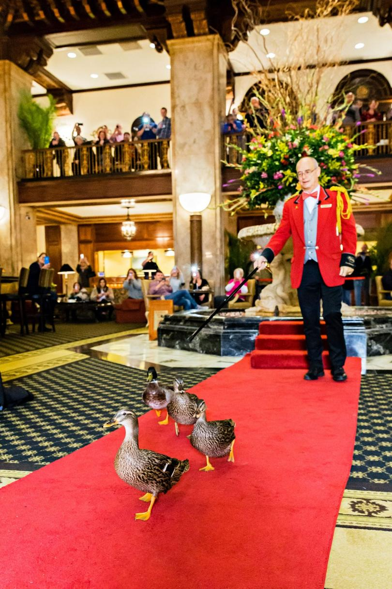 My One Shining Moment as a Peabody Duck