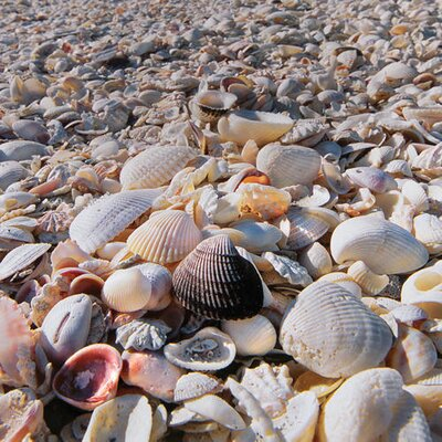 Diy How To Use Seashell Souvenirs To Decorate Your Home