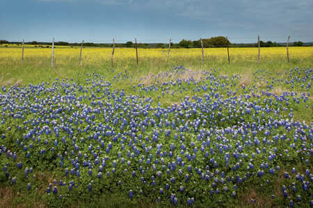 Explore the Heart of Texas