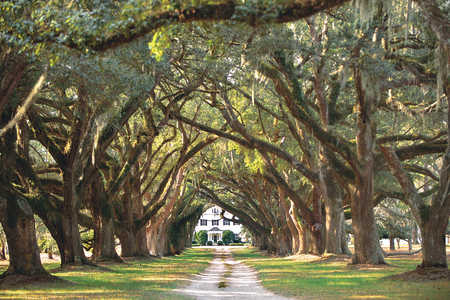 Backroads Guide to Carolina Lowcountry [INFO OT - How To See the ACE Basin]