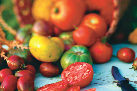Grow the Best Tomatoes (NEW)