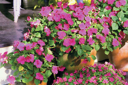 the ABCs of Annuals