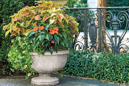 Orange and Green Container Garden