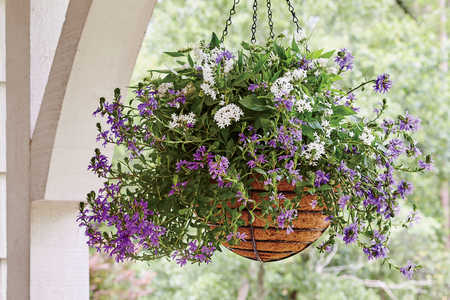 Summer's Most Low-Maintenance Container