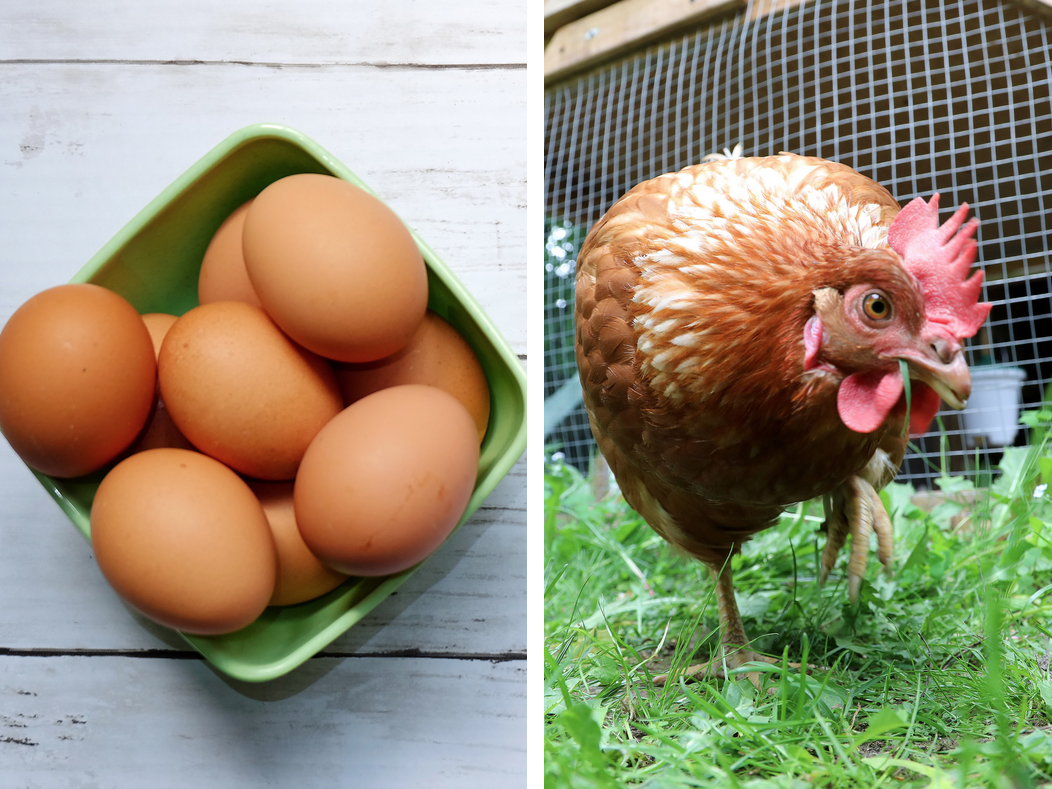High Egg Prices Are Pushing People to Buy Chickens