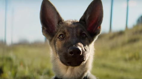 PETA Calls for A Dog's Purpose Boycott After Video Shows German Shepherd Forced Into Water