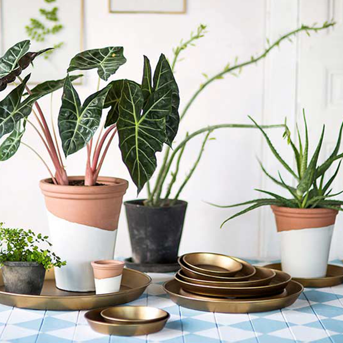 Terrain plant trays and saucers photo