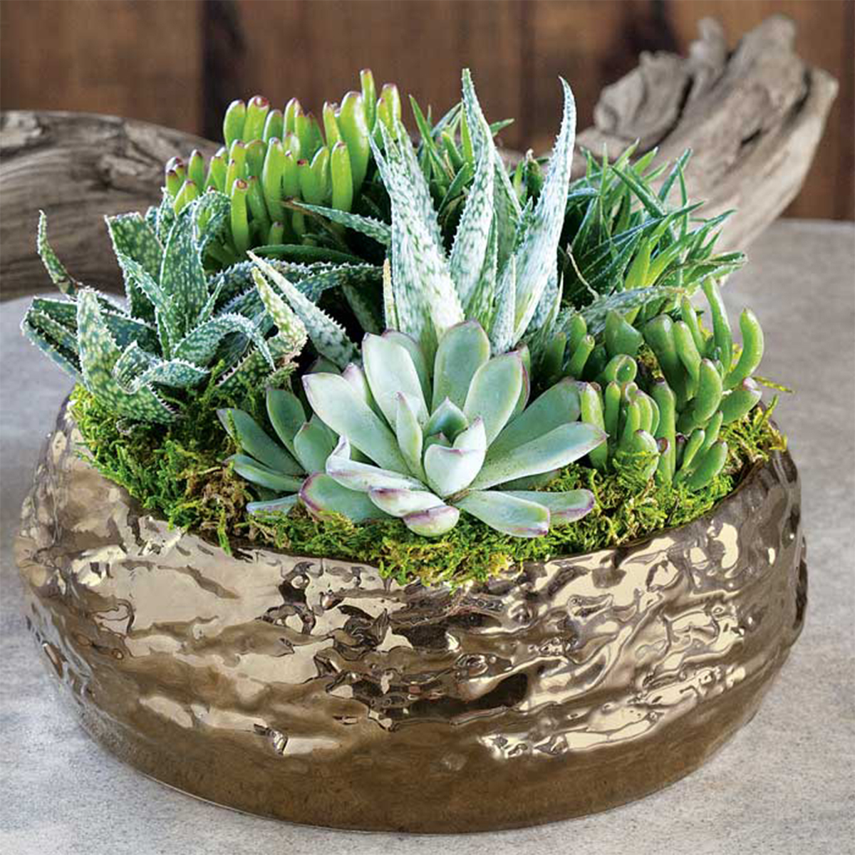 Gold ceramic planter filled with succulents and greenery photo