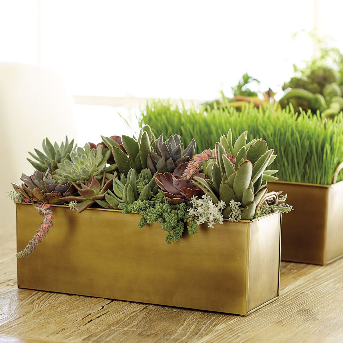 Gold metal cachepot with succulents and other plants inside photo