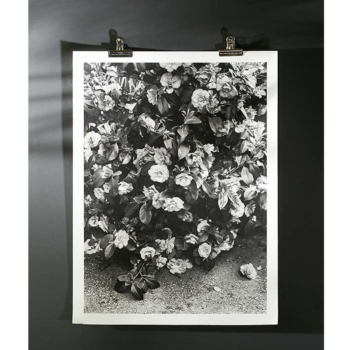 Black and white print of real flowers photo