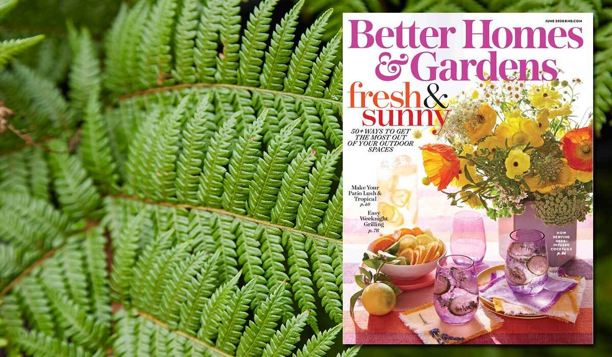 Cover of June 2020 issue of Better Homes & Gardens next to greenery