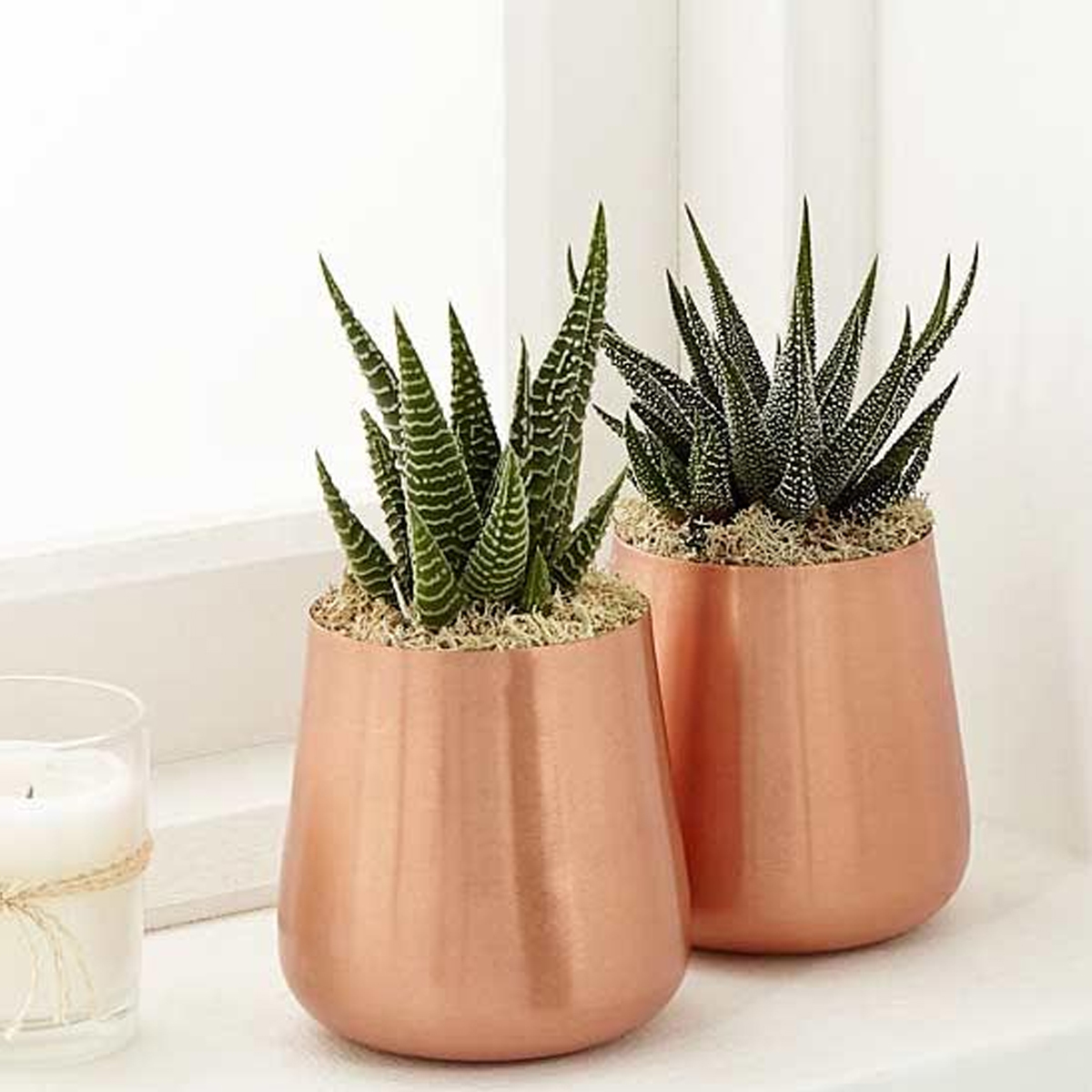 Add some shine to your home with these modern copper planters. photo