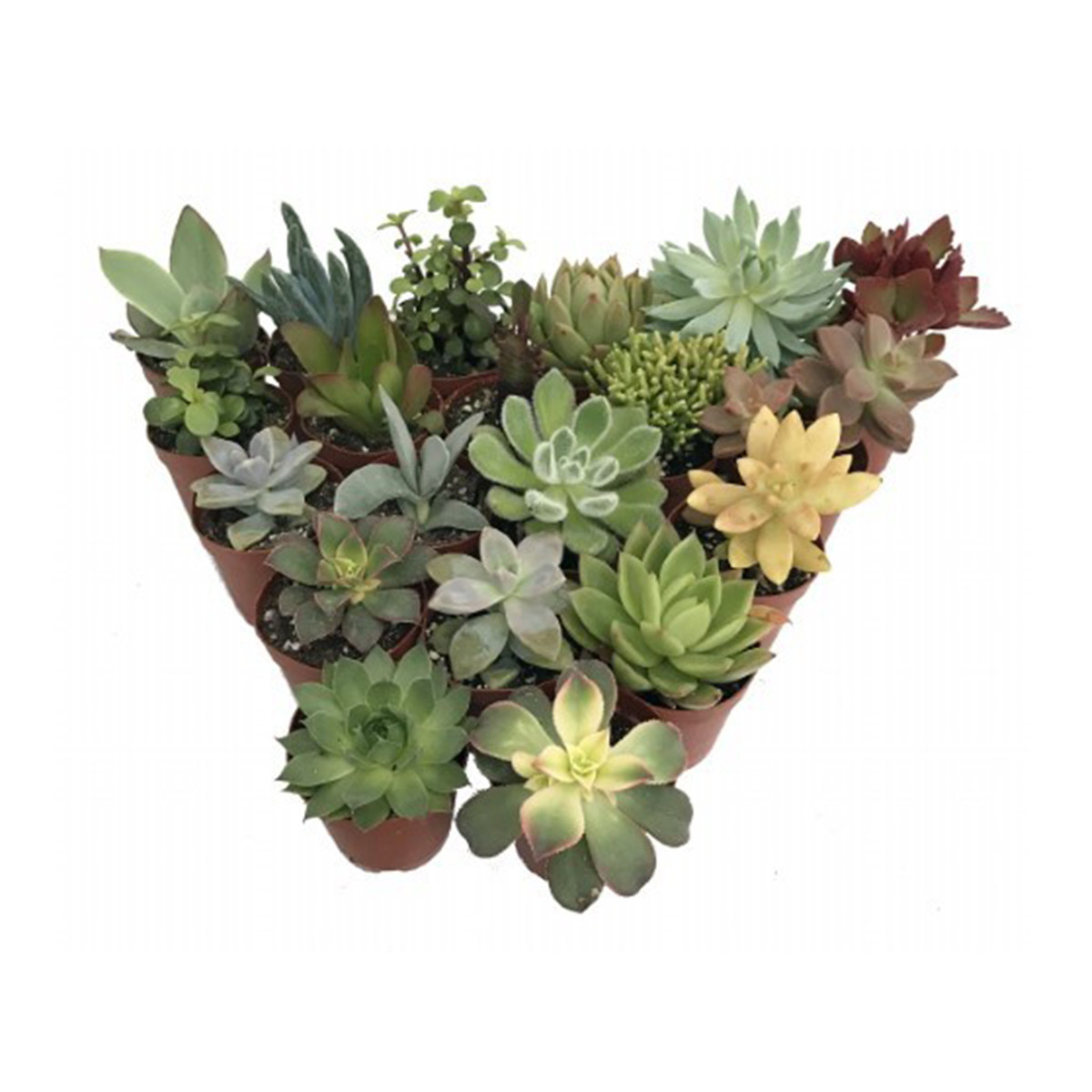 Group of different succulent plants photo