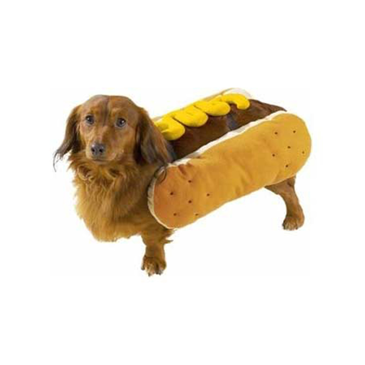 Jet hot dog puppy costume photo