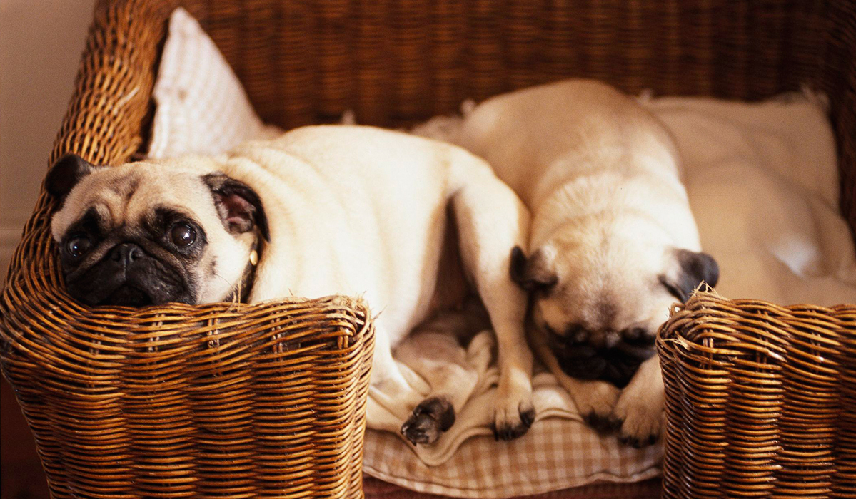 10 Things Every Pug-Lover Needs Now