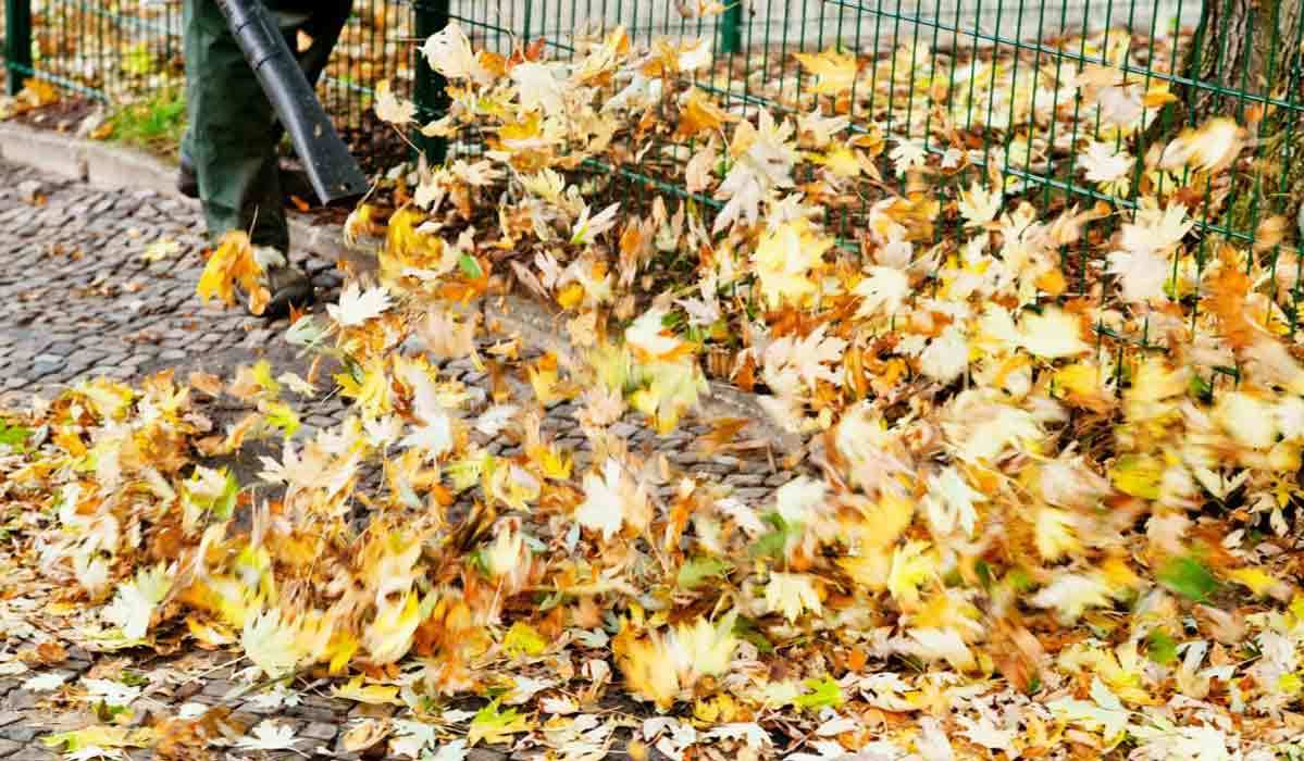 Best Leaf Blowers of 2019