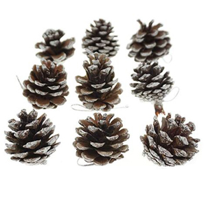 Natural pinecones with painted white tips. photo