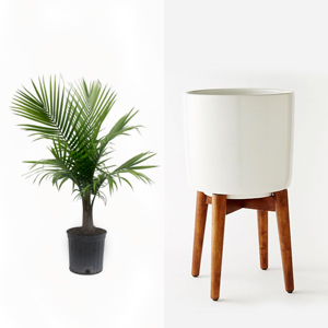 Small palm tree paired with a white planter with wooden legs photo