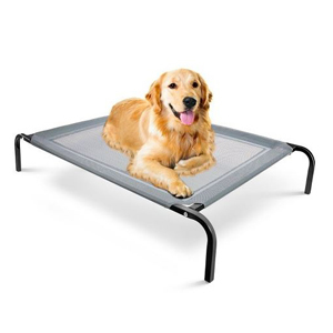 Golden retriever lying on a Paws & Pals elevated cot. photo
