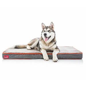 Husky lying on a gray Brindle dog bed with red trim from Amazon. photo