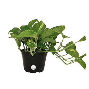 5 Indoor Plants That Are Almost Impossible to Kill | Real Simple on house plant with peach blooms, house plant with jagged leaves, house plant with curly leaves, plant with spikes on leaves, indoor plants with long leaves, house plant identification leaves, house plant with brown leaves, house plant with green and yellow variegated leaves, house plant with bumpy leaves, house plant with waxy flowers, house plant with striped leaves, house plant with heart shaped leaves, house plant spiky green yellow, house with pink and green plant leaves, house plants with colorful leaves, house plant with fuzzy leaves, house plant with pointed leaves, house plant with big leaves, indoor plants with colorful leaves,