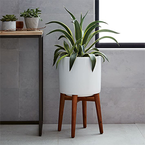 White planter with wood legs and a green plant in it. photo