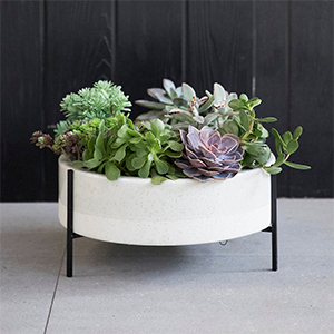 Wide ceramic planter with white bowl and black legs with succulents planted inside. photo