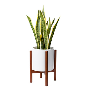 White plant stand with wood legs and a green plant inside. photo
