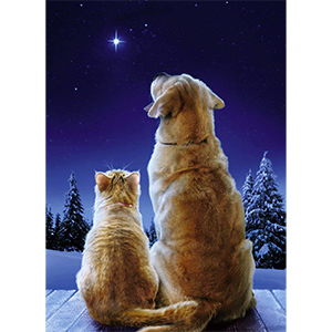 A cat and a dog sitting next to each other looking up at the stars outside in the snow photo