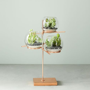 6 Unique Terrariums That Bring Your Home To Life Real Simple