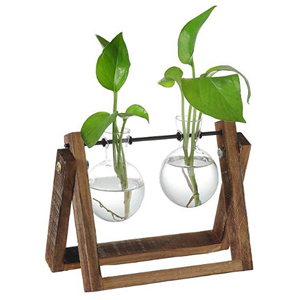 Rustic wood stand with two glass bulbs and plants inside. photo