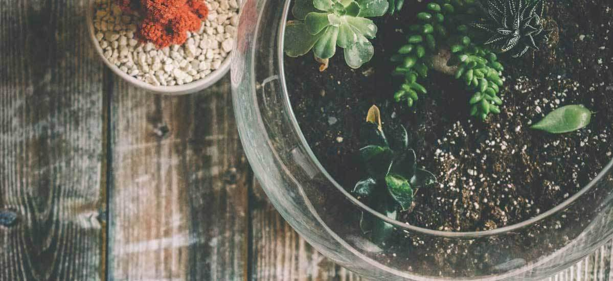 Two terrariums on a wood table filled with pebbles, soil, and succulents.