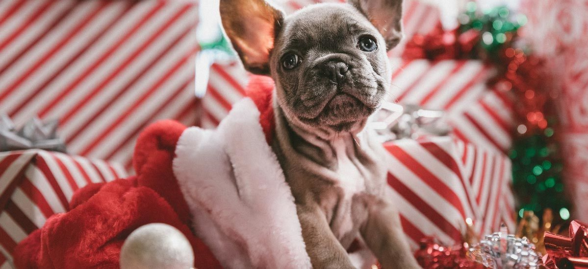 9 Unique Pet Gifts That Cost as Little as $15